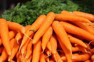 свежи моркови