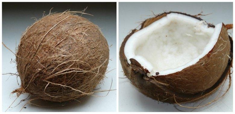 кокос - сојузник на здравјето