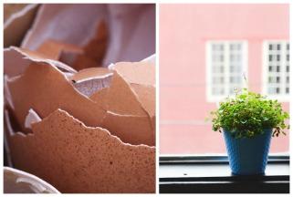 Лушпи од јајца како природно ѓубриво за растенија 1