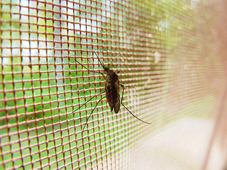 5 лесни домашни начини да се справите со комарци и инсекти 2