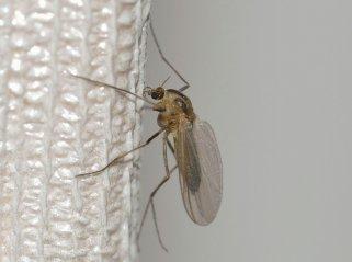 Направете сами замка за комарци 1