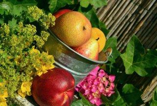 14 намирници за долг живот (листа од Џејми Оливер) 1