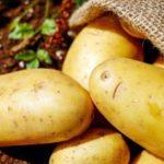 Домашни лекови за желудник и црн дроб со сок од компир 1