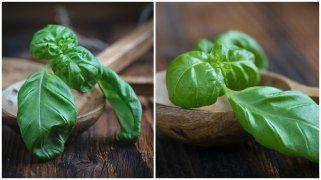 Најефективен начин да ја одржите свежината на зелените зачини и до една недела 1