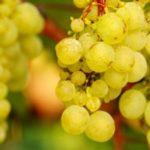 3 намирници кои е добро да се јадат во есен 1