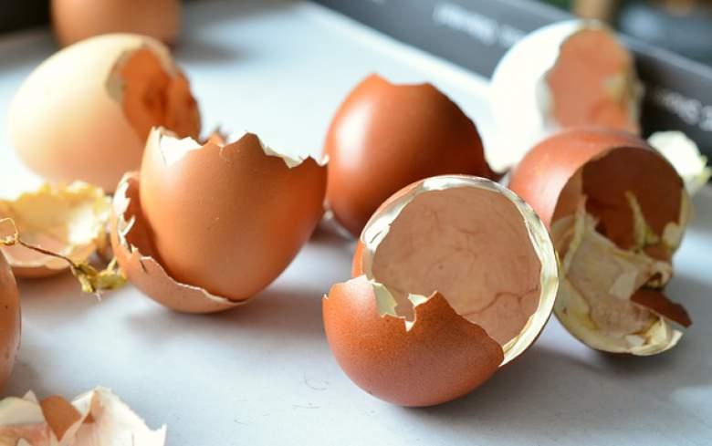 лушпи од јајца