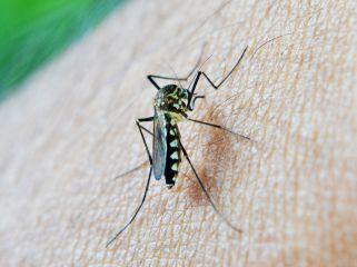 убод од комарец