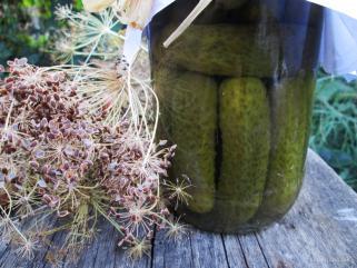 кисели краставички корнишони 1