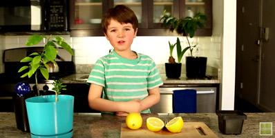 дрво од лимон од семе