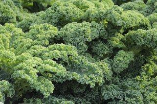 Кељ - здрав зеленчук за кој недоволно знаеме 1