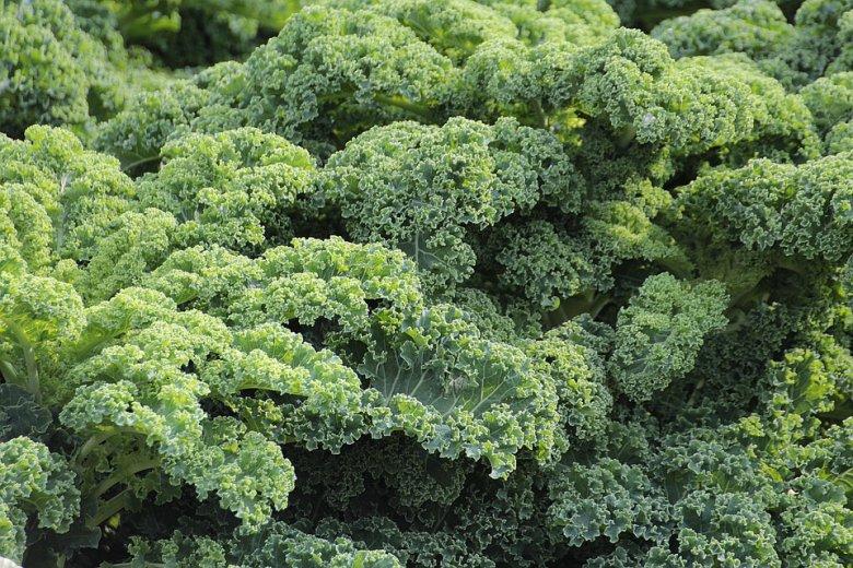 Кељ - здрав зеленчук за кој недоволно знаеме 2