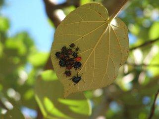 природни пестициди