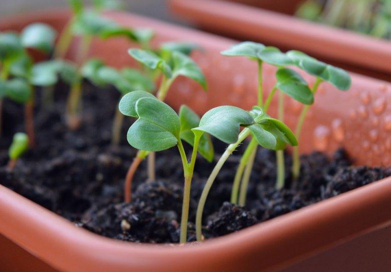 одгледување на зеленчук во куќа или стан