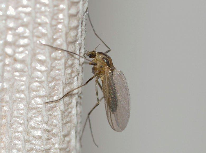 Направете сами замка за комарци 2