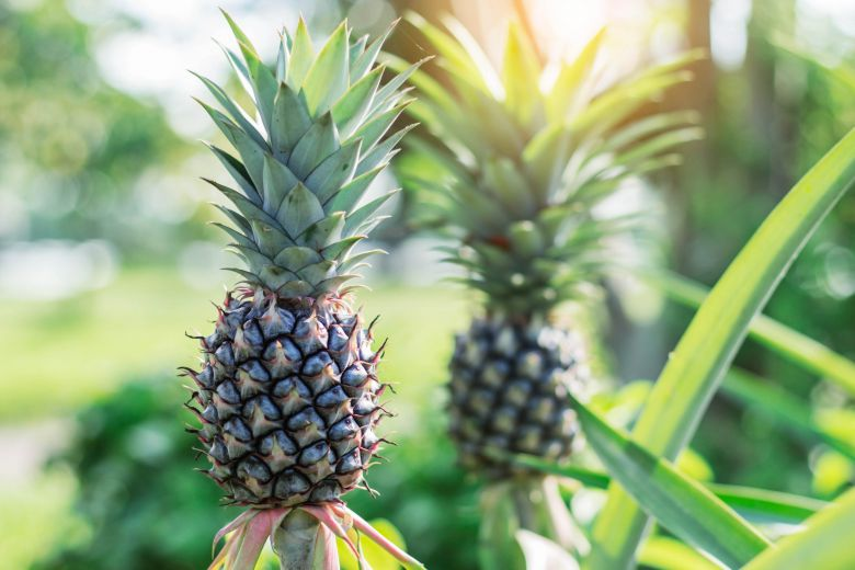 ананас за слабеење