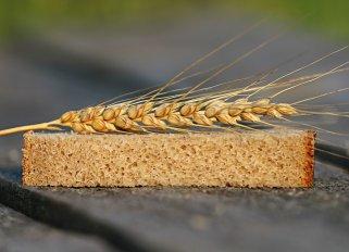 Пченица - една од основните намирници на нашата планета 1