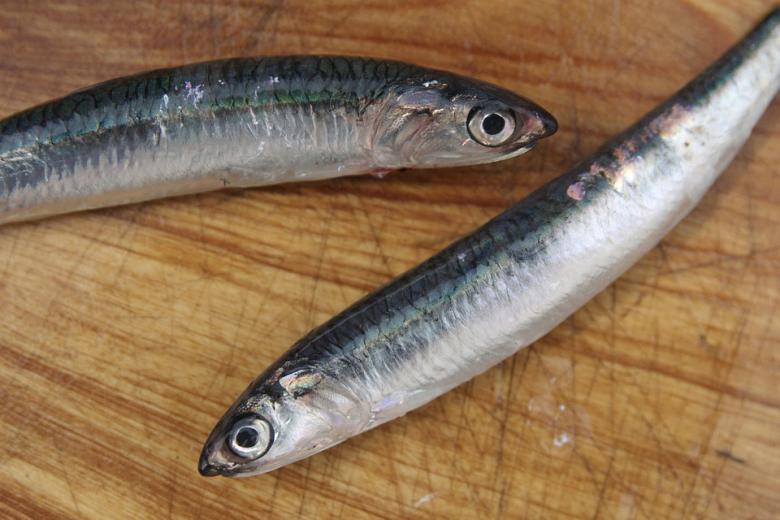 купување на свежа риба
