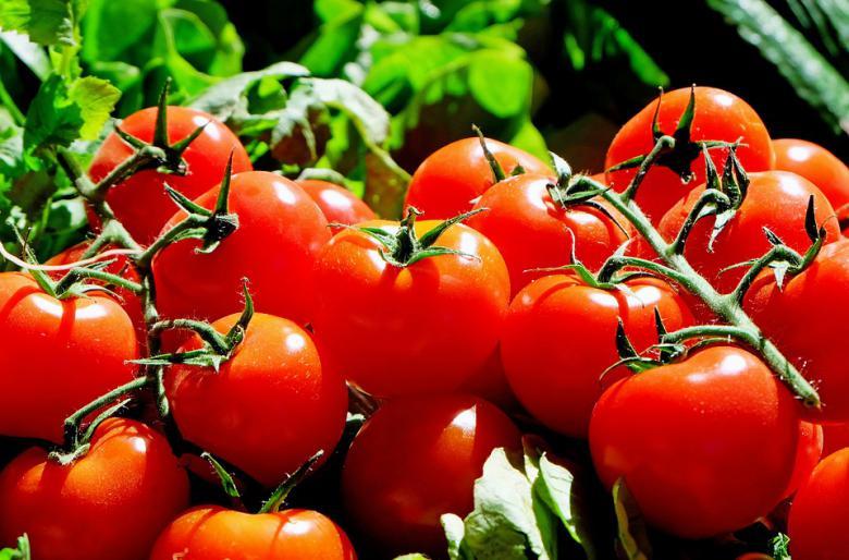 домати рак на желудник
