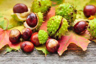 10 причини зошто да консумирате костени почесто 1