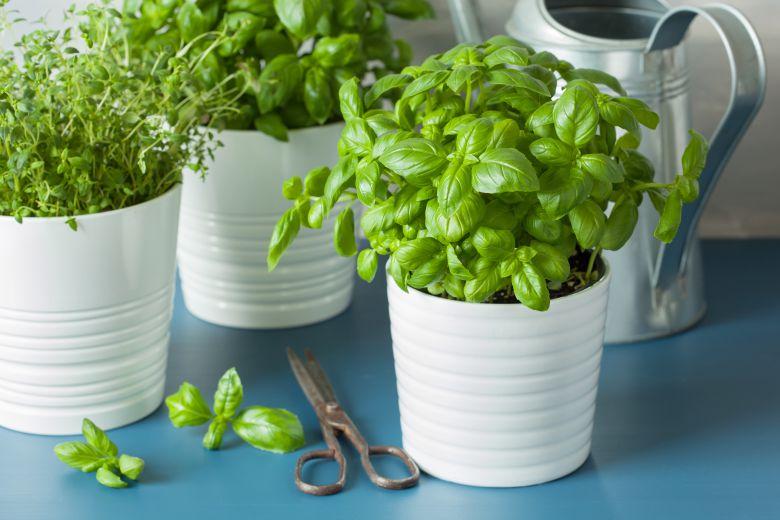 4 практични употребни на зелениот чај кои вреди да ги знаете