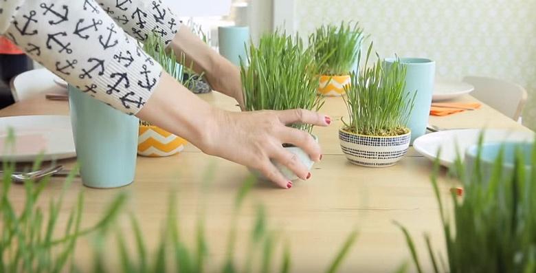 пченична трева