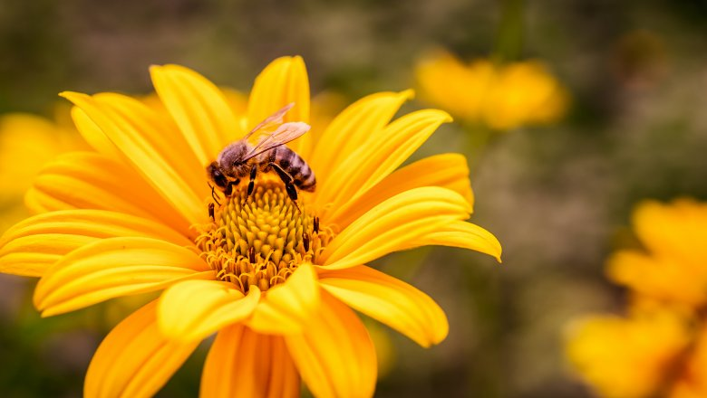убод од пчела