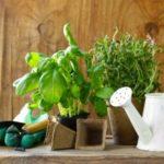 8 лековити растенија кои е корисно да ги имате во домот 1