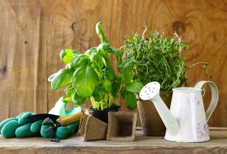 8 лековити растенија кои е корисно да ги имате во домот 2