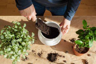 4 природни начини за подобрување на квалитетот на земјата - со домашни рецепти 1