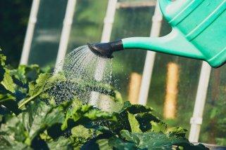 6 начини како да рециклирате вода во домашни услови 1