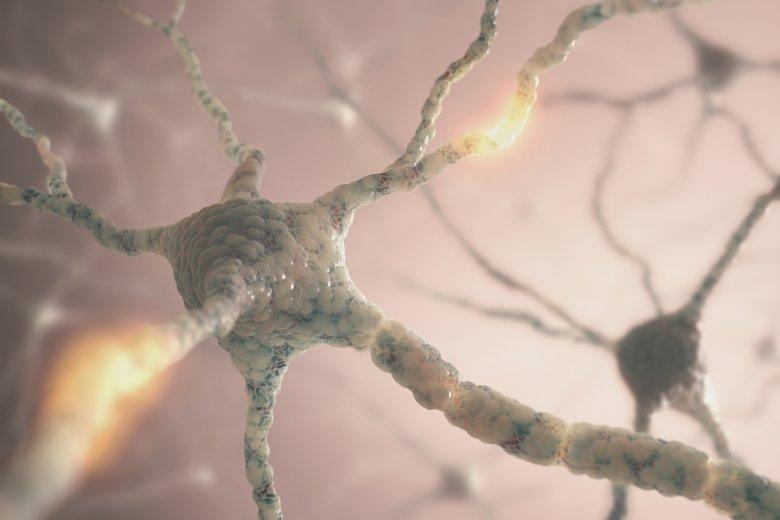 Со GABA неуротрансмитерот до 7 придобивки за здравјето 2