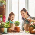 Природен препарат за растенија - еликсир за опоравување 1