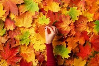 есенски паднати лисја